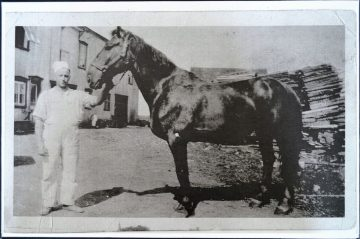 Rosaire présentant le cheval qui l'aide à effectuer les livraisons de la Boulangerie DeMailly.